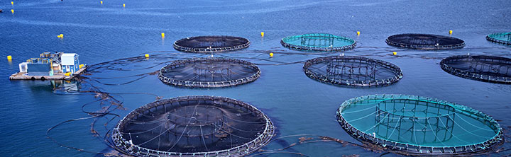 Aquaculture Healthcare Market Size and Business Opportunities