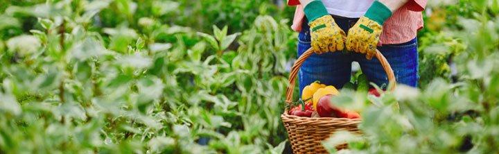 Post-Harvest Treatment Market Size to reach $45 billion by 2028