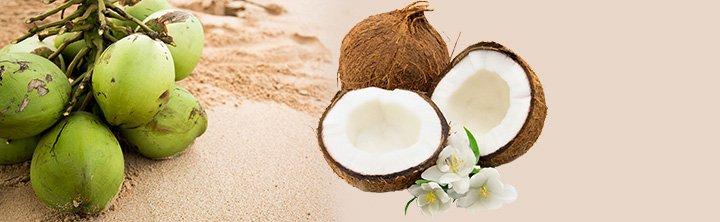 Global coconut market