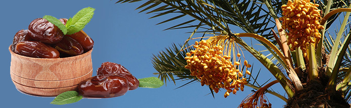 Global Date Palm Market