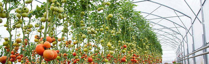 Global Greenhouse Horticulture Market