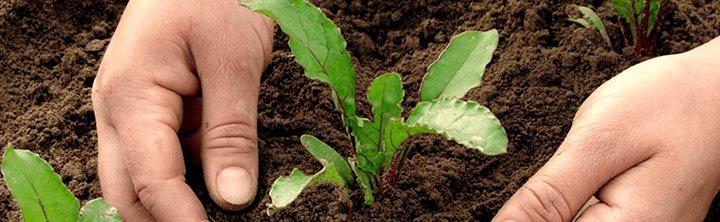 Why Algae Serves As An Important Bio fertilizer