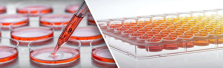 Advances in Stem Culture Favors Prompt Adoption in Global Cell Culture Protein Surface Coating Market